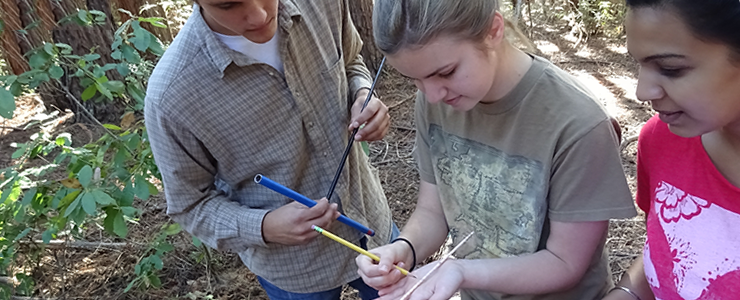 UCSC Campus Natural Reserve Continuous Forest Inventory (CFI Fall 2015) interns measure tree growth rates.