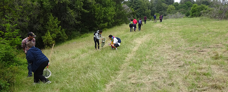 UCSC Environmental Studies 100 (Ecology and Society) students examine insect diversity in Porter Meadow on UCSC campus