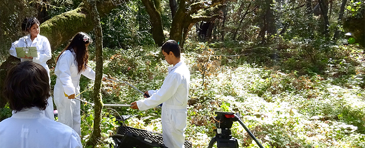 UCSC Forest Ecology Research Plot interns use sonic tomography equipment to collect data.