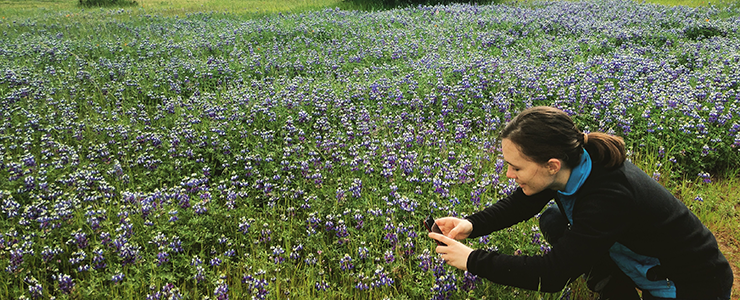 A Campus Natural Reserve intern photographs lupine blooming in a meadow.