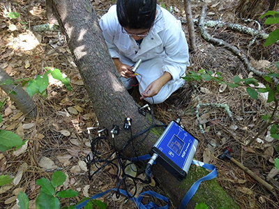 Forest Ecology Research Plot undergraduates study forest ecology using sonic tomography